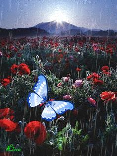 ******MERCY***** Butterfly Gif, Butterfly Frame, Beautiful Butterflies, Beautiful Roses, Flower Images, Flower Art, Iphone Wallpaper Landscape, Beautiful Love Images, Moving Photos
