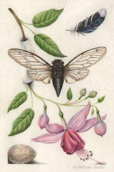 Botanical illuminations inspired by a rare Renaissance book.