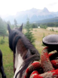 Horseback riding in the mountains.