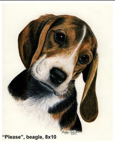 Colorful Drawings, Easy Drawings, Dog Eyes, Anime Animals, Brown Dog, Color Pencil Art, Dog Art, Pet Portraits, Art Pictures