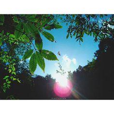 【etoile6423】さんのInstagramをピンしています。 《. . #撮ったあとにちょうちょに気付いた 😂 #森の散策 #森の中 #森 #自然 #ちょうちょ #蝶 #葉 #陽射し #空 #青空 #カコソラ  #igersjp #ig_japan_nature #ig_japan  #instagood #love #forest #sky #butterfly #leaf #sunlight #ig_nature #ファインダー越しの私の世界》 Celestial, Instagram Posts, Outdoor, Outdoors, Outdoor Games, Outdoor Living, Garden