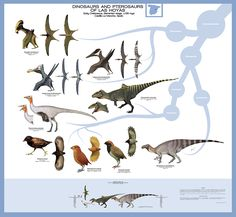 Dinosaurs and pterosaurs of las Hoyas, Spain. Dinosaurs and Pterosaurs of Las Hoyas Extinct Birds, Extinct Animals, Real Dinosaur, Dinosaur Art, Dinosaur Sketch, Creature Drawings, Prehistoric Creatures, Zoology, Before Us