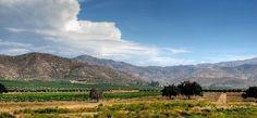 Valle de Guadalupe, Baja California, Mexico.