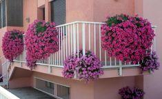 Verbena, pianta perfetta per il balcone fiorito - Idee Green