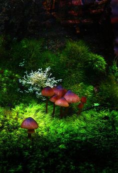 The mushroom village - Beautiful nature images, forest photos, pictures of mushrooms, landscape photographs, nature photography