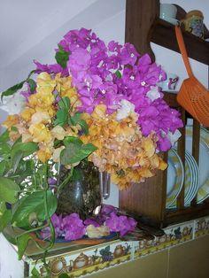 Flores multicolores en mi cocina.