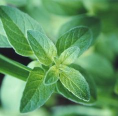 8 Herbs to Get Your Culinary Garden Growing