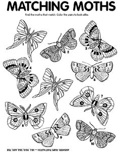 Moth Match coloring page