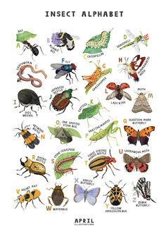 Your place to buy and sell all things handmade Bug Art, Insect Art, Beautiful Posters, Poster Prints, Art Prints, Bugs And Insects, Etsy, How To Draw Hands, Drawings