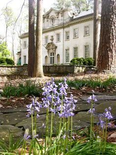 Spring flowers at the Swan House, Atlanta, GA