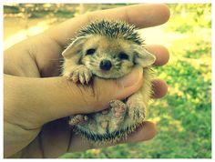 yavru hayvanlar: Yandex.Görsel'de 10 bin görsel bulundu