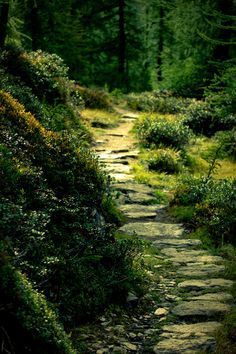 Path through the forest...