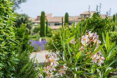Lauriers en fleurs #edouardloubet #maisonsedouardloubet #labastidedecapelongue #relaischateaux #bonnieux #luberon #myluberon #provence
