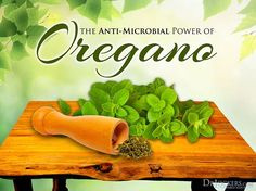 Oregano is a wonderful, aromatic herb that is native to the Mediterranean. http://drjockers.com/12-ways-use-oregano/