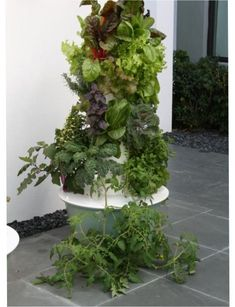 What would you want to grow in your Tower Garden? Here's a list of what you can:  https://gardenwithease.towergarden.com/what-can-i-grow