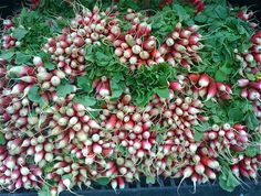 union-square-radishes