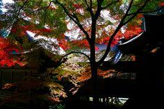 Autumn Gradation by Junya Hasegawa on 500px