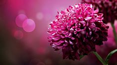 Beautiful Pink Flower Wallpaper #4859 Full HD 2560x2560 Resolution ...