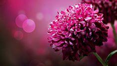 Beautiful Pink Flower Wallpaper #4859 Full HD 2560x2560 Resolution ...
