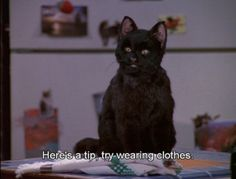 Watched this show all the time! The 40 greatest things ever said by Salem the Cat! Just cause my name's Sabrina :)