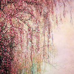 Christiane Steinicke, Mystic Forest, 2012 / 2014 © ch.lumas.com/?L=1&cHash=c164444e3dfa5fd6d5b396da65e5721f #Lumas