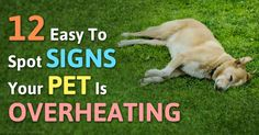 Keeping your pet safe and healthy during the summer months is easy if you understand that your pet doesn't handle heat the same way you do.