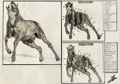 Free for personal use Horse Skeleton Drawing of your choice Skeleton Drawings, Horse Drawings, Realistic Drawings, Animal Drawings, Art Drawings, Drawing Art, Drawing Lessons, Drawing Ideas, Anatomy Sketches