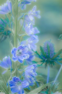 """""""Delphinium"""" by Mary Carver"""