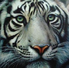 Byly tygr