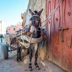 Hallo kleiner Freund #littlecityinmarokko #flyedelweiss #marrakesh #souk #neverstopexploring #esel Edelweiss, Flyer, Horses, Instagram Posts, Animals, Donkey, Instagram Images, Boyfriend, Animales