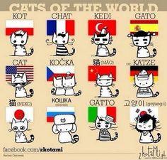 I am fluent in Italian, English, German, Spanish