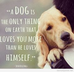 Dog Best Friend Quotes (3)