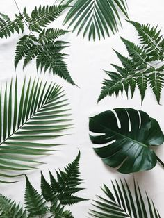Green plant white background. A minimalist inspiration source. Minimal. Live lightweight.