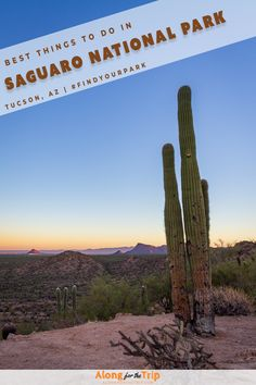 Nestled in the Sonoran Desert of Arizona, Saguaro National Park is a wonderland of prickly and majestic saguaro cactus. We loved visiting this park and exploring it's arid landscapes and unbelievable sunrises. Exploring this park in late fall is perfect, so check out our guide for the best things to do in Saguaro National Park. | #NationalPark #Saguaro #FindYourPark #Arizona