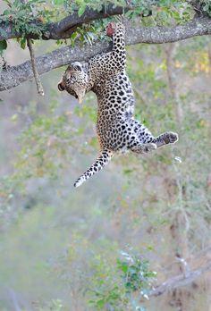 Inspiring Cheetah.