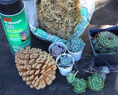 Hanging Pine cone succulent planter supplies