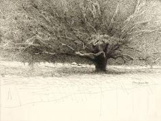 Laury's Oak Tree, Fresno, 2008, by Mary Sprague.