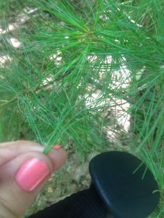 Edible plants you'll find in the wild