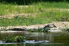 Wildlife Safari, Jungle Safari, Safari Adventure, Tourist Information, Amazing Destinations, Uganda, National Parks, Tours, Vacation