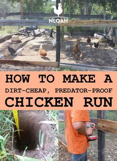 You can make your own chicken run out of dirt-cheap materials, some of which are probably lying around your back yard right now. Photos and videos included. Source by oakhh and me ideas Cheap Chicken Coops, Chicken Coop Run, Diy Chicken Coop Plans, Chicken Pen, Chicken Garden, Chicken Coop Designs, Backyard Chicken Coops, Building A Chicken Coop, Chicken Run Ideas Diy