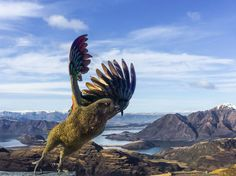 Animals posing for photos in New Zealand! Poses For Photos, Car Photos, South Island, Art Model, British Isles, Bald Eagle, New Zealand, Scenery, Creatures