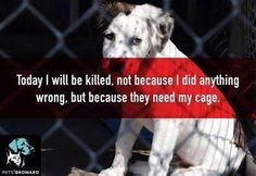 Don't breed or buy, while shelter animals die! There are so many pups out there that deserve a second chance to live the life they were meant to live!