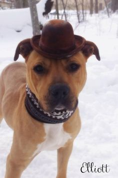 Meet Elliot, an adoptable Terrier looking for a forever home. If you're looking for a new pet to adopt or want information on how to get involved with adoptable pets, Petfinder.com is a great resource.