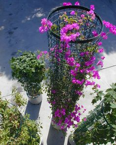 Use greenscreen® planters for mounting panel screens to planter shapes, or adjacent to wall mounted applications or structure. Wall Trellis, Metal Trellis, Trellis Panels, Vine Trellis, Garden Trellis, Trellis Ideas, Green Facade, Climbing Vines, Rustic Gardens