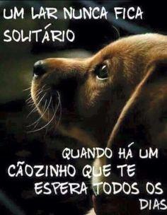 Amor de cão.!...