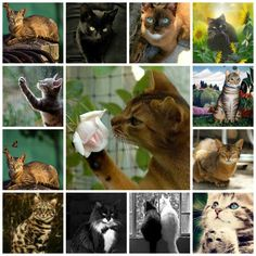 Collage of my favorite cats...<3