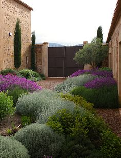 Have to go with xeriscaping and low water in the cottage garden. Like these plants in the Jardin Toledo Gravel garden, xeriscaping, dry garden, mediterranean garden. Dry Garden, Gravel Garden, Gravel Patio, Side Garden, Vegetable Garden, Boxwood Garden, Pea Gravel, Garden Water, Garden Pond