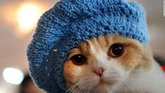 Image result for cute cat
