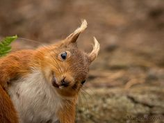 Hello, Is It Me You're Looking For? | Cheeky little Red take… | Flickr