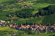 Un paysage typique - Route des Vins, Alsace, France